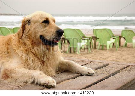 A Dog On Winter Beach