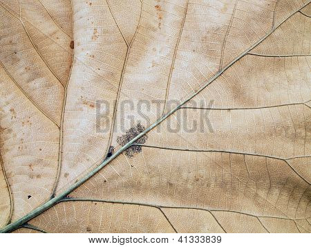 Patterns On The Leaves Shriveled