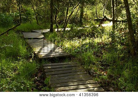 Wooden Path Through Forest
