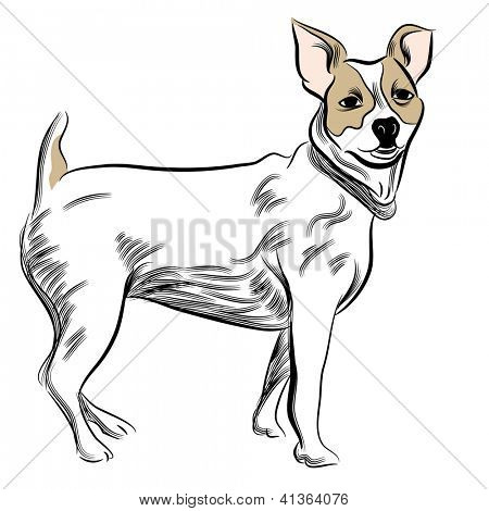 An image of a Parsons Jack Russell terrier.