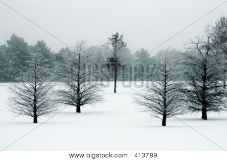 Season Winter Landscape