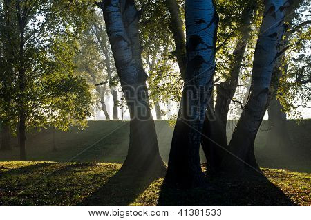 First sunrays on trees thru the morning fog