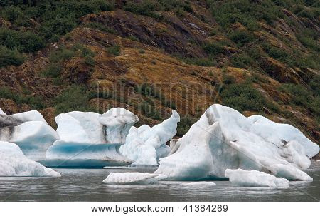 Icebergs floating