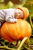 picture of sweet-corn  - sweet baby with pumpkin hat sleeping on big orange pumpkin - JPG