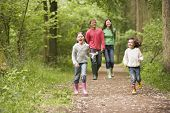 picture of family fun  - Families walking through springtime wood - JPG
