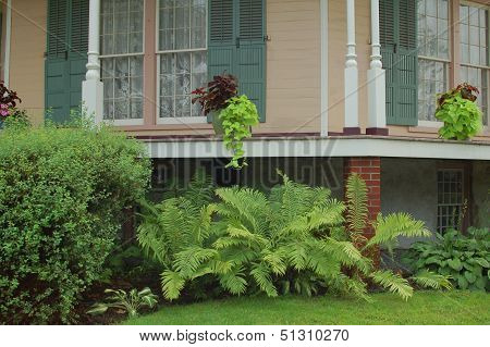 Ferns and Porch