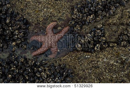 Dramatic Starfish