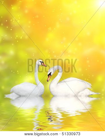 Two white swans on yellow background
