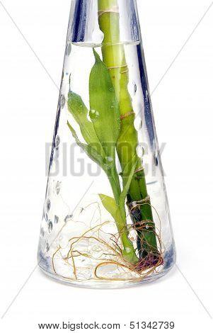 Plants In Bottle