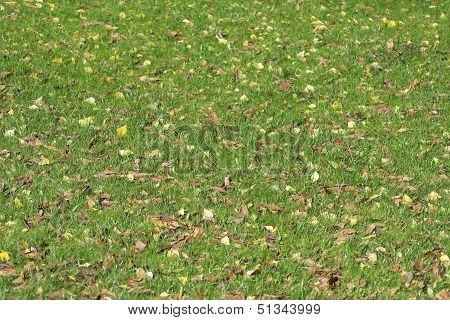 Green Grass In Autumn Park