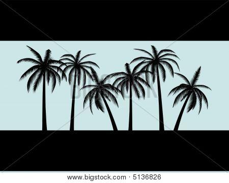 Blackpalms