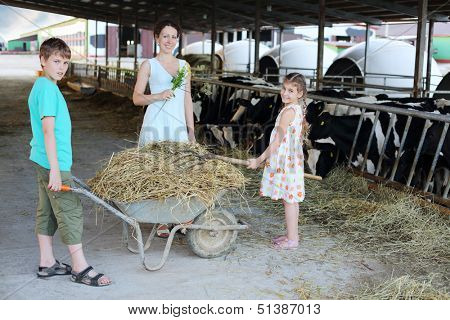 Boy keeps trolley with hay and girl loads hay by pitchfork and mother stands near their at cow farm. Focus on hay.
