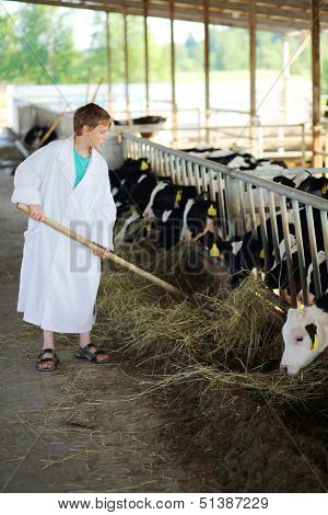 Boy in white coat loads hay by big pitchfork for calves at large farm.