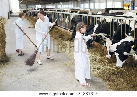 Happy family of three work in large farm with many cows. Focus on girl and right cow.