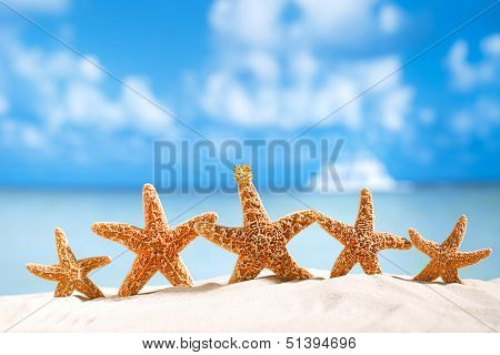 starfish  with ocean , beach and seascape, shallow dof