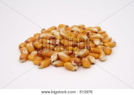 Kernels Of Corn 2