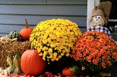 stock photo of scarecrow  - Arrangement from Flowers Bale of Hay Pumpkin Squashes Apples Maize Scarecrow and dry leaves in front of Old Barn as decoration for Thanksgiving Day - JPG