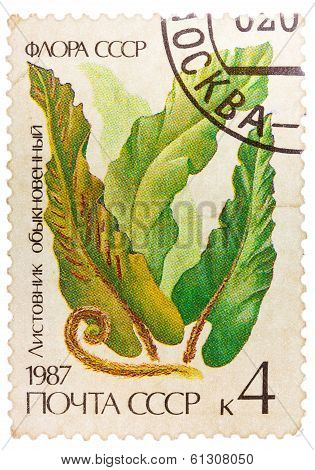 Post Stamp Printed In Ussr (cccp, Soviet Union) Shows Image Of Harts Tongue Fern (scolopendrium Vulg