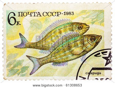 Post Stamp Printed In Ussr (cccp, Soviet Union) Shows Perciformes (percomorphi, Acanthopteri)