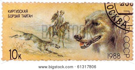 Stamp Printed In Ussr, Shows Kirghiz Greyhound, Falconry, Series Hunting Dogs