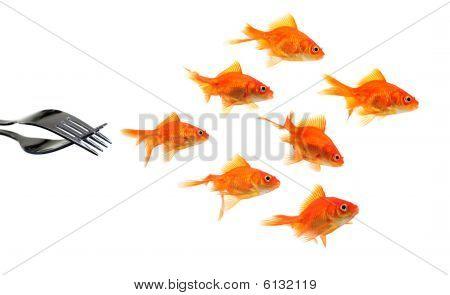 Goldfish escapando de Forks