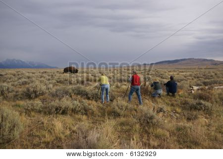 Buffalo Hunters - Photographers And Bison