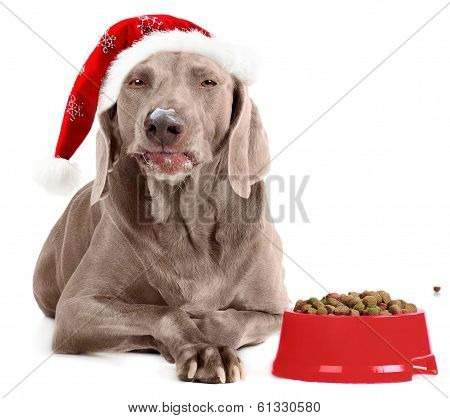 Santa Dog Isolated On White