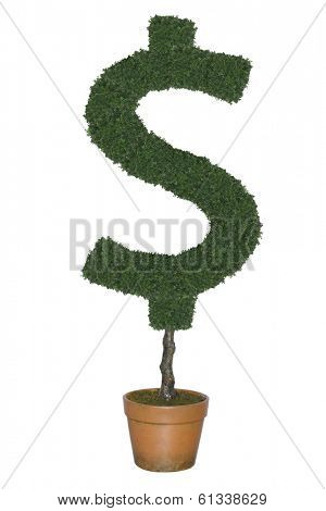 Topiary tree in shape of dollar symbol