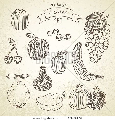 Tasty fruit set in vector - persimmon, banana, grape, pomegranate, peach, cherry, pear, plum, blueberry, quince, mango. Vintage vegetarian concept collection