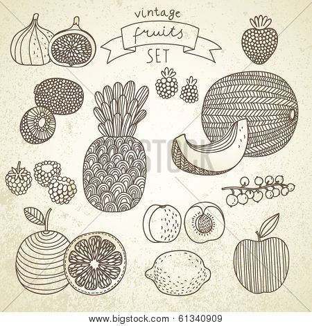 Tasty fruit set in vector - raspberry, redcurrant, orange, fig, kiwi fruit, kiwi, melon, apple, apricot, pineapple, blackberry, strawberry, lemon. Vintage vegetarian concept collection