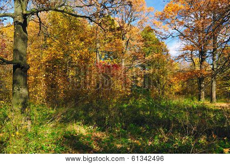 Golden autumn forest. Trees and bushes with yellow and red fall foliage