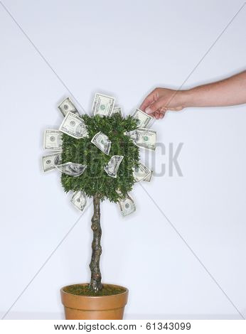 Hand picking money from a dollar tree