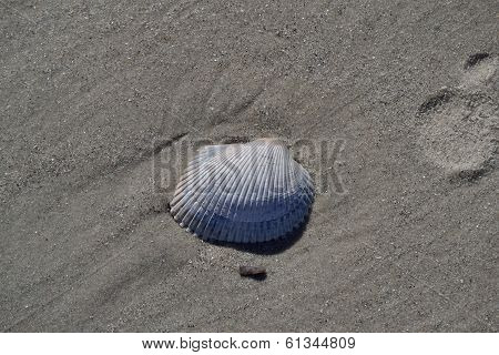 Seashell In The Sand At The Beach