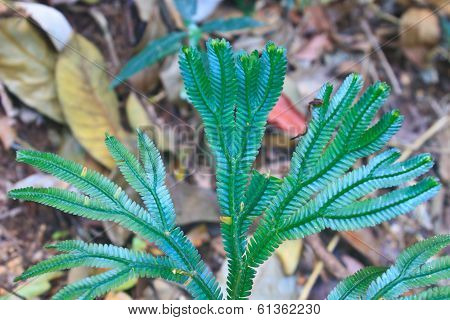 Fern, Natural Abstraction In Forest