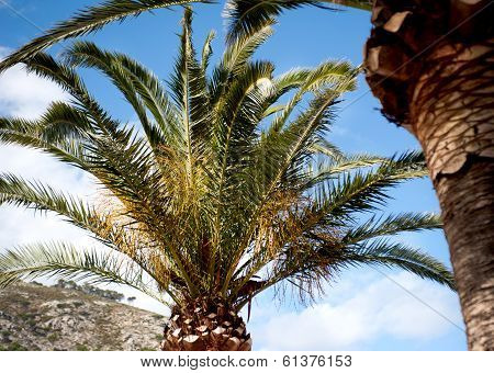 Palm Tree And Hillside