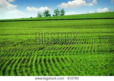 Green Farm Field