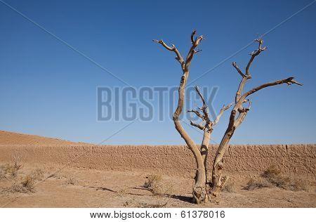 Dry Tree In The Desert Against Blue Sky