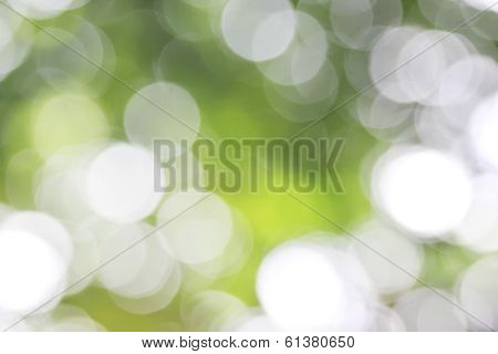 Nature Green Bokeh
