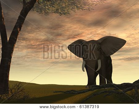 Elephant With The Sun From Behind