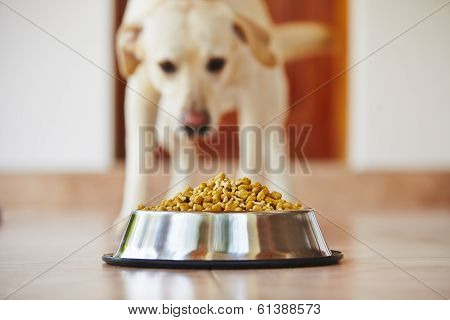 Hungry Dog