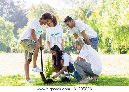 Group of multiethnic volunteers planting in park