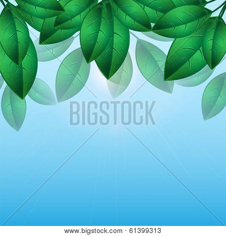 Green Leaves On A Background Of Blue Sky.natural Background.floral Design.place For Your Text. Vecto