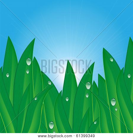 Green Grass With Dew Drops On A Background Of Blue Sky .natural Background.summer And Spring Design.