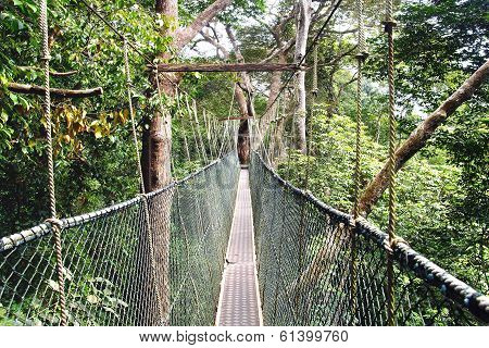 Canopy walk.