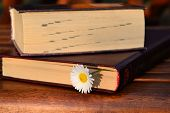 Book and daisy flower