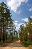 Summer Day In The Pine Forest poster