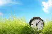 alarm clock on green grass,concept.