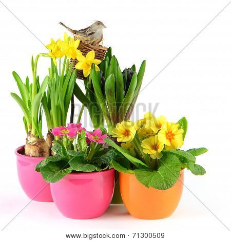 Colorful Spring Flowers. Easter Decoration