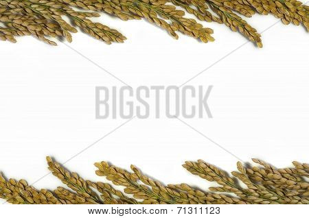 Rice Plants With White Rice And Unmilled Rice Isolated On White