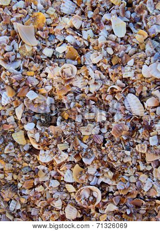 Pieces of broken shells on the beach